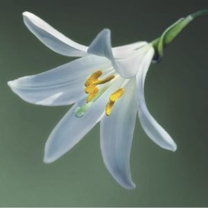 lily 300x300 - Workshops